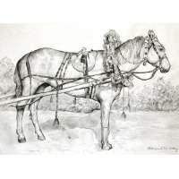 """""""Лошадь в праздничной упряжи."""" графика Арасланов Р. Н. 2014 год"""